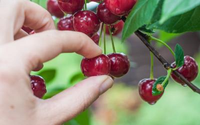 Mercantile cherry-picks high growth IPOs